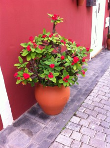 Flower pot in Sta Brigida