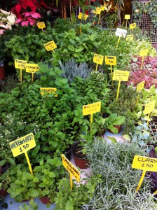 Fresh herbs on the market