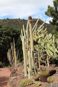 A view of Jardin Botanico Canario