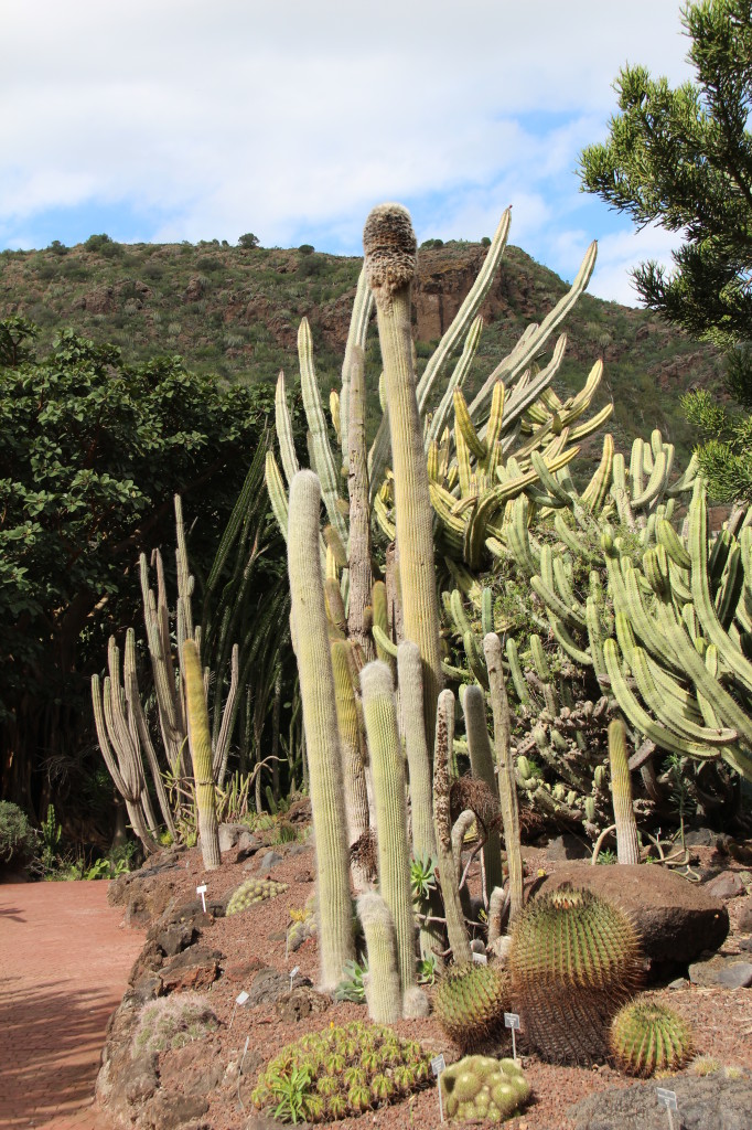 A view of jardin botanico canario routes and trips - Jardin botanico canario ...