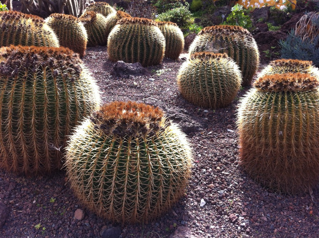 Trip from las palmas crater and cave village routes - Jardin botanico las palmas ...