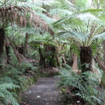 A path at William Ricketts Sanctuary, Dandenong Ranges