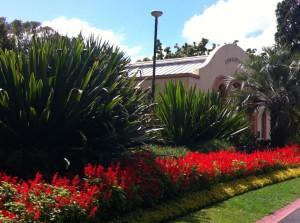 Flowers in Fitzroy Gardens, Melbourne