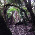 Rainforest in the Dandenong Ranges