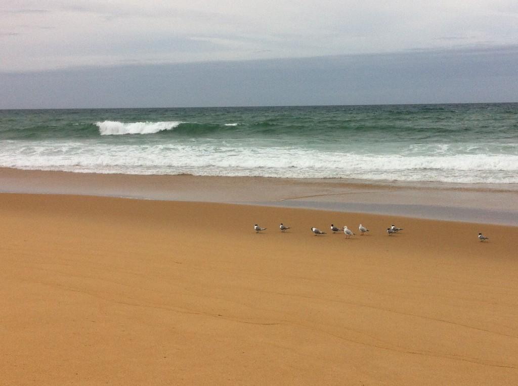 Seagulls at ninety-mile beach, Australia