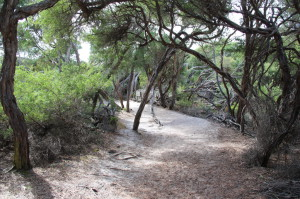 Walking in the forest to Squeaky Beach, Wilsons Promontory