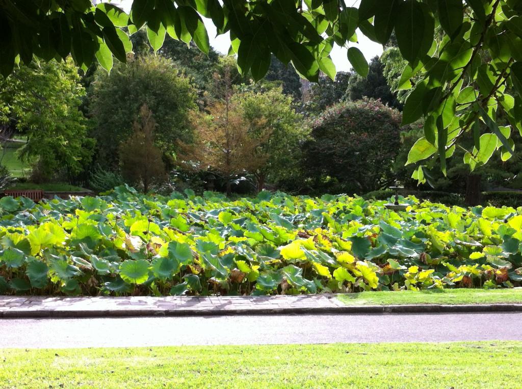 Sydney Royal Botanic Gardens Autumn Colours Routes And Trips
