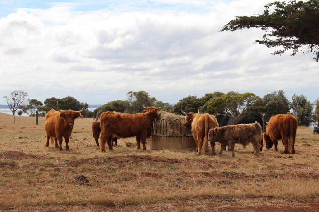 Australia's oldest farm, Churchill Island