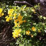 Flowers at Watsons Bay, Sydney