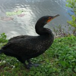 A bird in the Everglades