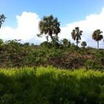 Nature in Flamingo, the Everglades
