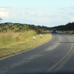 Road to Everglades National Park