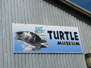 Turtle Museum, Key West