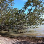 Waters of Gulf of Mexico, Flamingo, Everglades