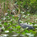 Wildlife in Shark Valley, Everglades, Florida