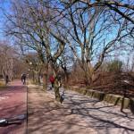 Bike lane in Sopot