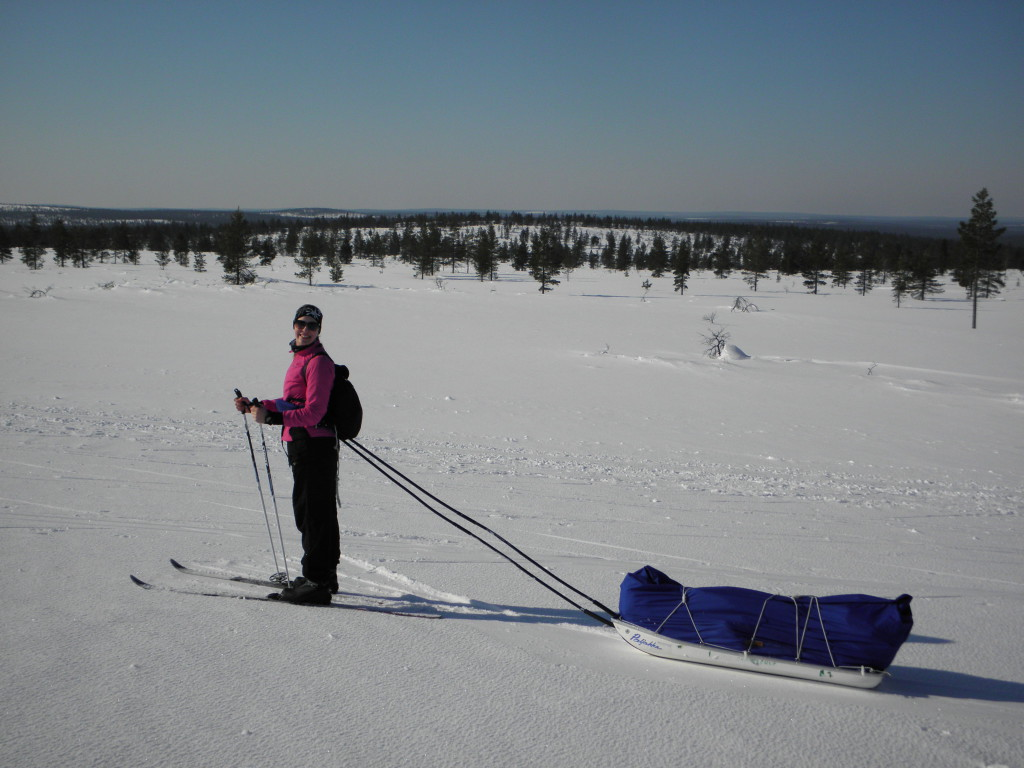 Skiing with a pulkka in Lapland