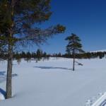Suomunruoktu, Lapland