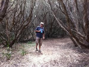 Bush-walking, Cape Otway, the Great Ocean Road