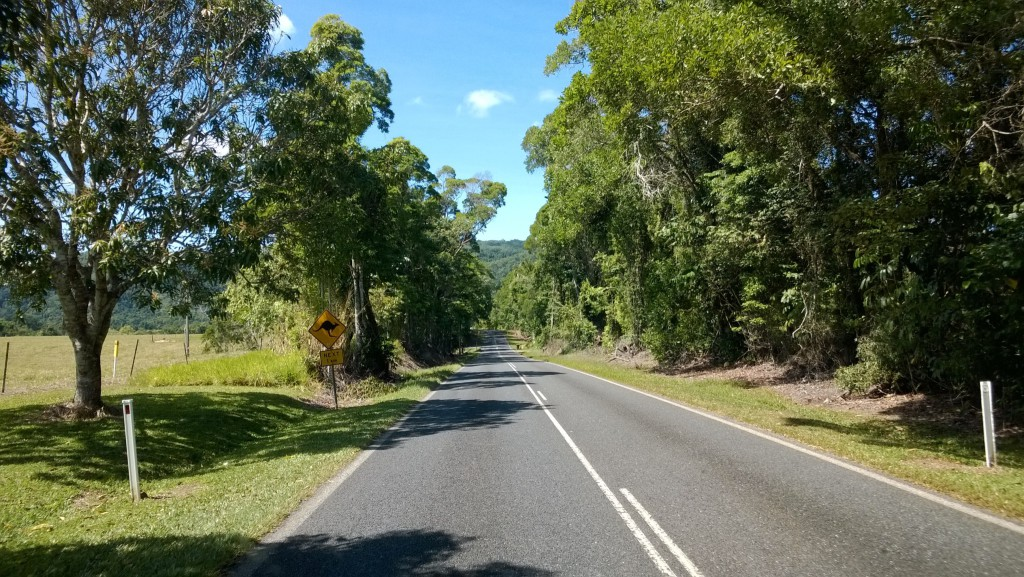 Driving from Cairns to Daintree