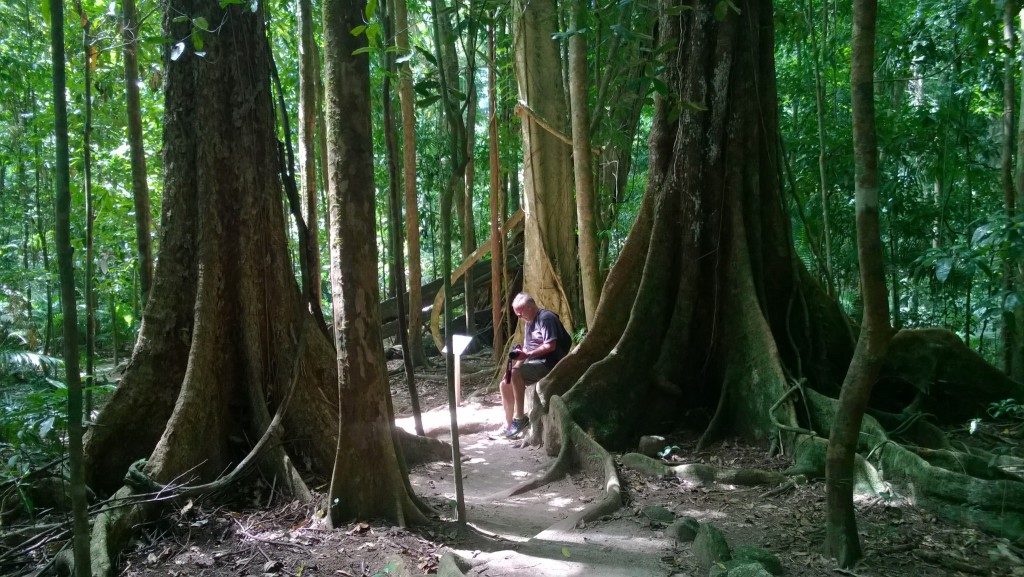 Trees in Mossman Gorge, Daintree National Park