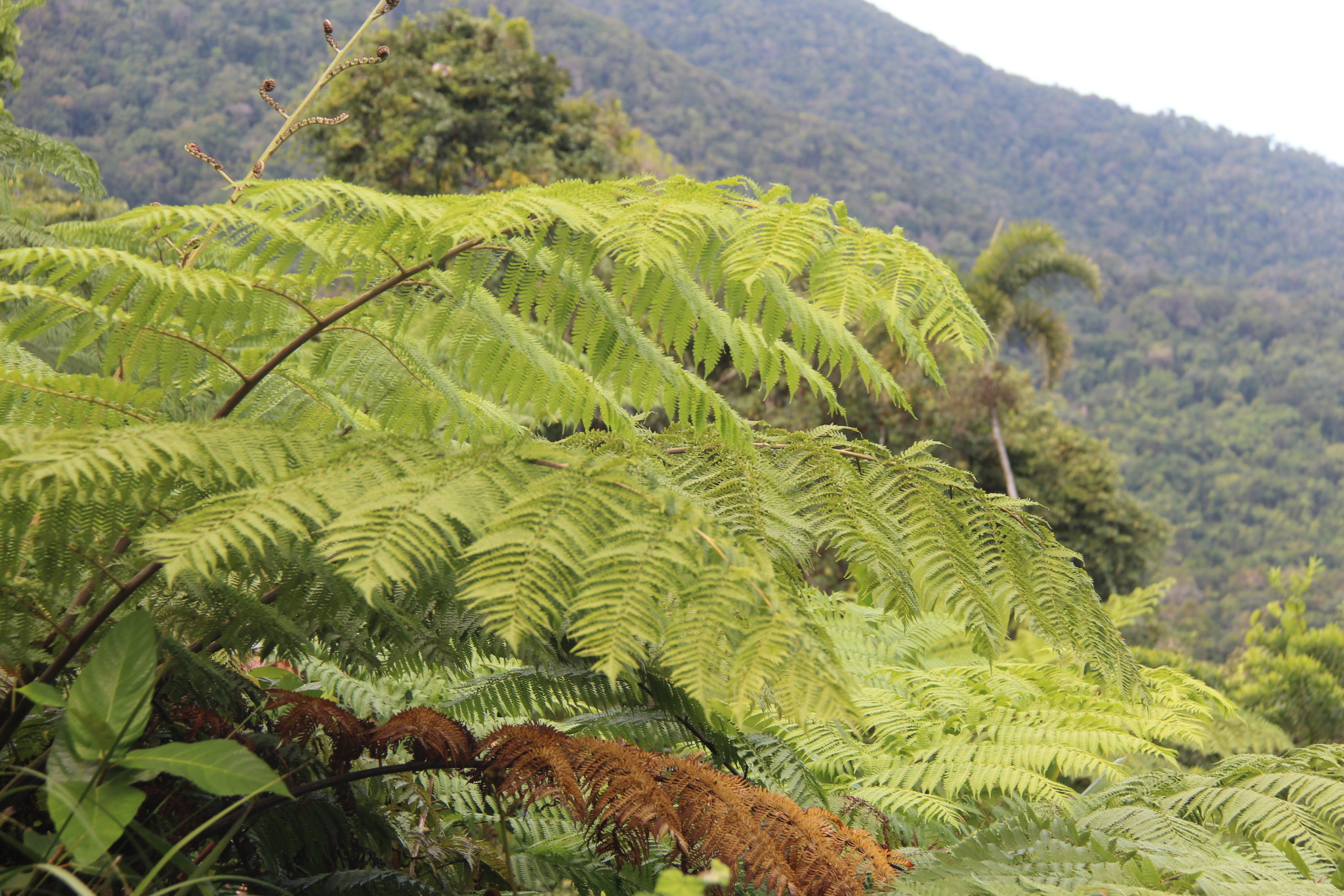 self drive trip to daintree rainforest routes and trips