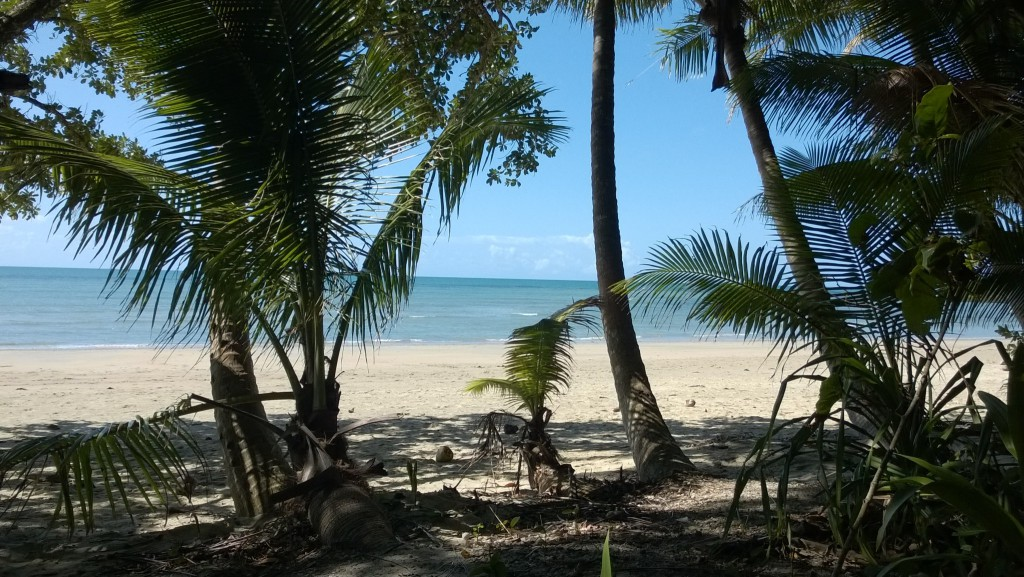 Dunk Island Holidays: Self Drive Trip To Daintree Rainforest