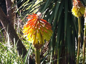 A colourful flower in the Royal Botanic Gardens, Melbourne