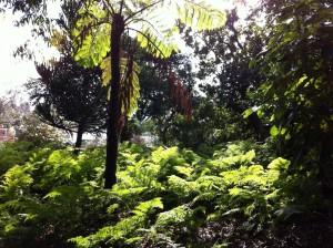Rainforest gully in Royal Botanic Gardens, Melbourne