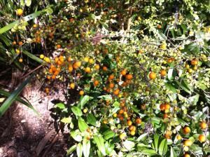 Plant at Royal Botanic Gardens, Melbourne