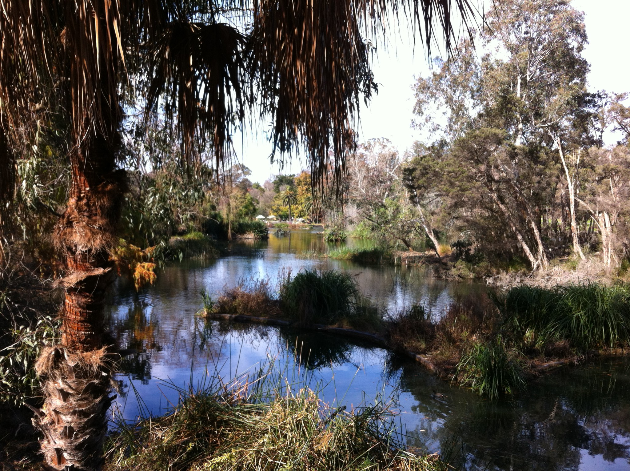 Yarra river walk in melbourne routes and trips for Garden pond melbourne
