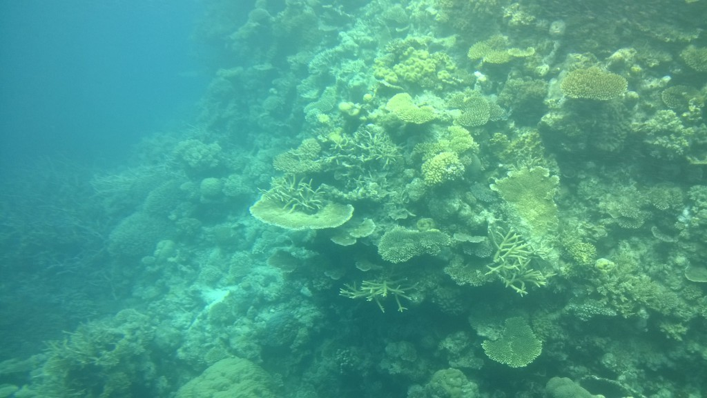 Agincourt reef coral life