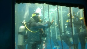 Learning scuba-diving at Agincourt Reef