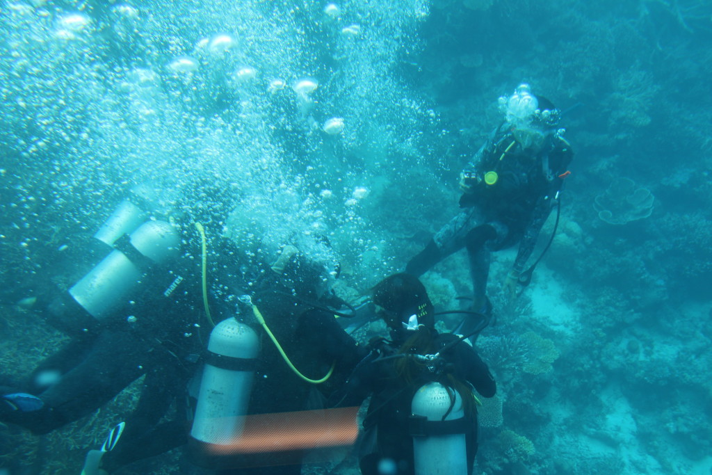 Scuba-diving at Agincourt Reef
