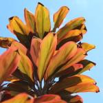 Bali vegetation