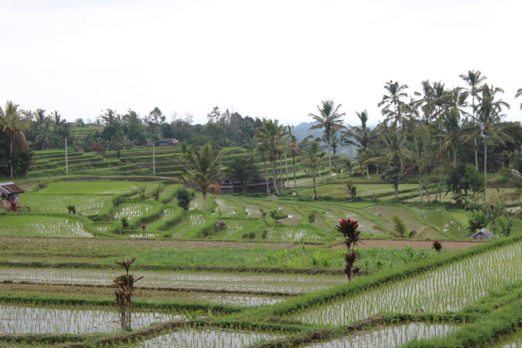 Jatiluwif rice terrace view, Bali