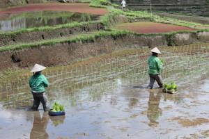 Men at work, Bali