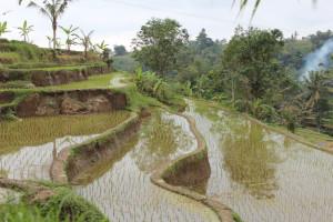 Terraces in Jatiluwif, Bali