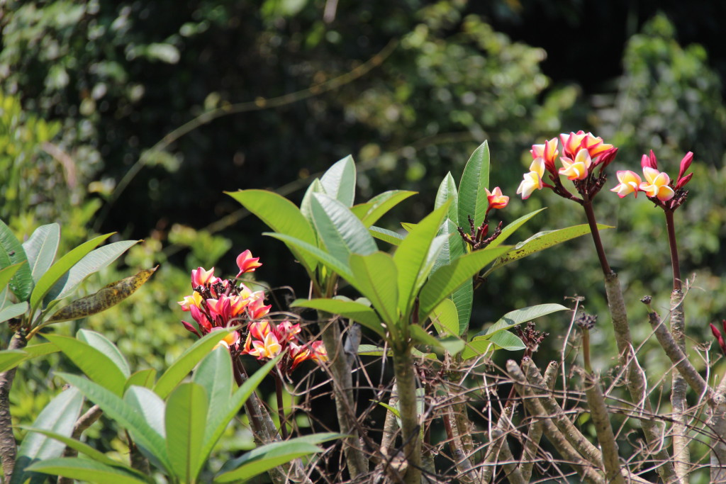 Batuan countryside flowers
