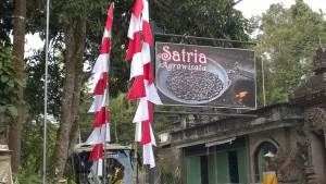 Balinese coffee plantation