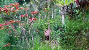 Coffee plantation view