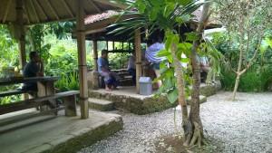 Coffee plantation visitors
