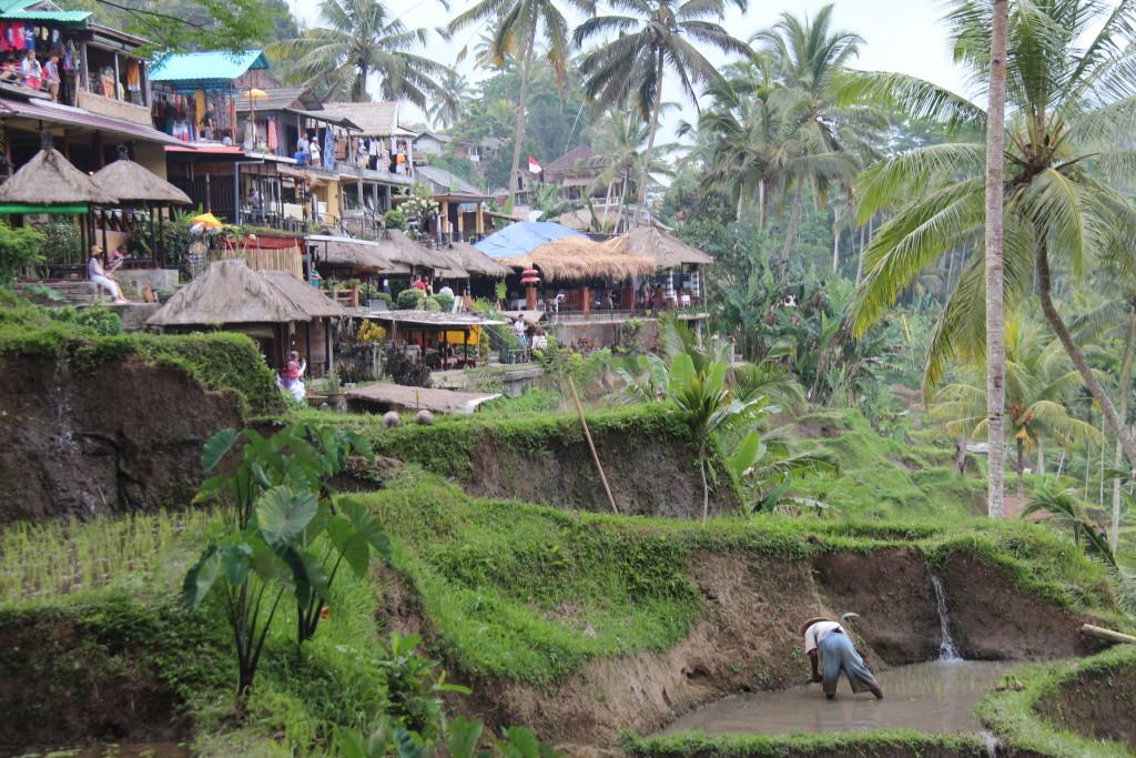 Tegallalang village