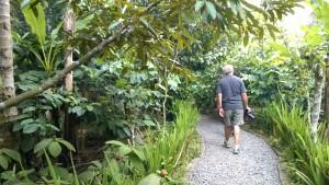 Walking on Balinese coffee plantation