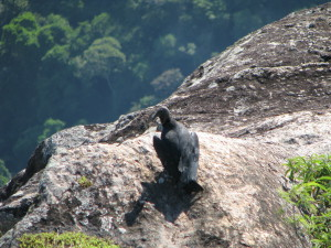 Bird on Sugar Loaf Mountain