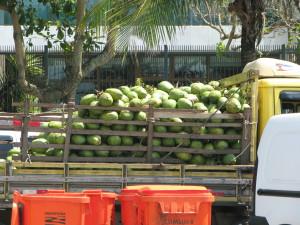 Coconut transport