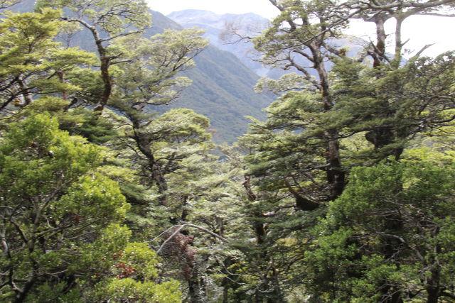 Arthur's Pass National Park trees