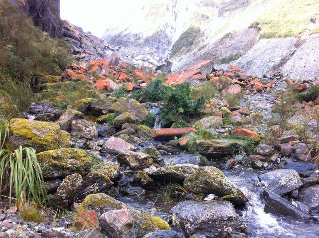 Fox Glacier walking track