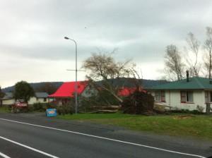 Hokitika fallen tree
