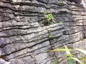 Punakaiki Pancake Rock wall